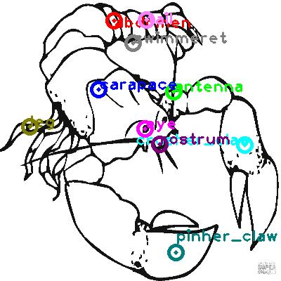 lobster_0016.png