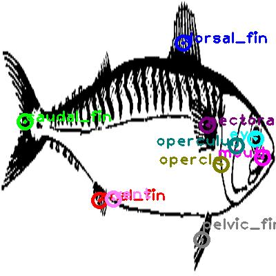 mackerel_0001.png