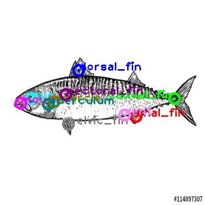mackerel_0002.png