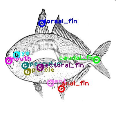 mackerel_0003.png