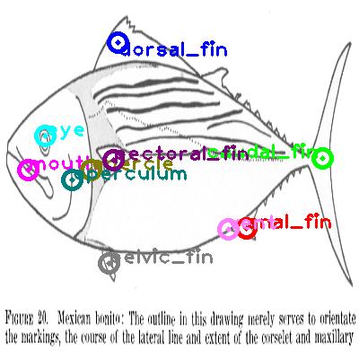 mackerel_0004.png