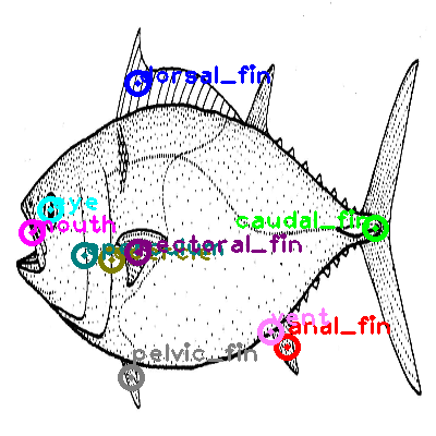 mackerel_0007.png