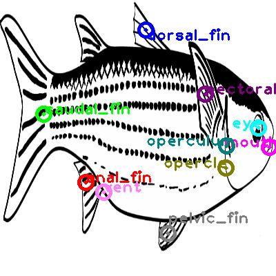 mackerel_0010.png