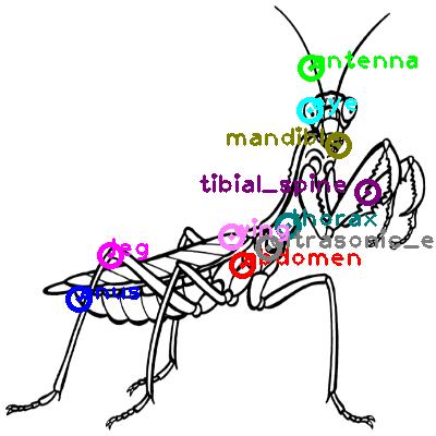 mantis_0002.png