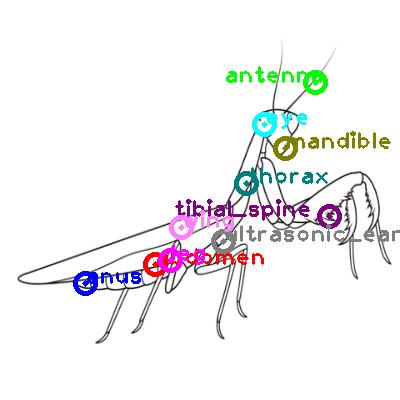mantis_0004.png