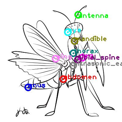 mantis_0008.png