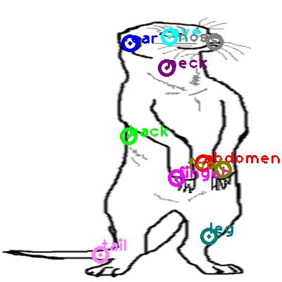 meerkat_0001.png