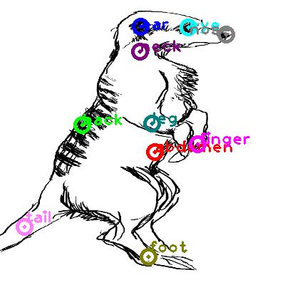 meerkat_0025.png