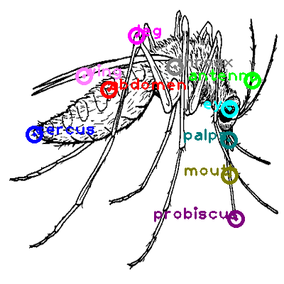 mosquito_0005.png