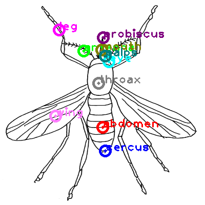 mosquito_0006.png