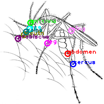 mosquito_0010.png