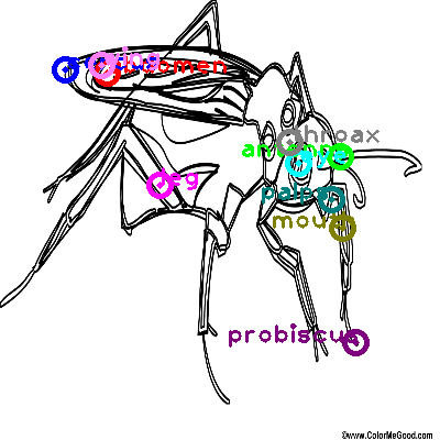 mosquito_0026.png