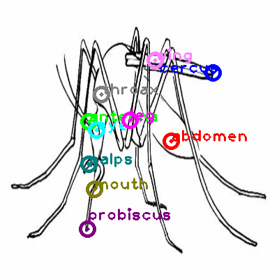 mosquito_0028.png