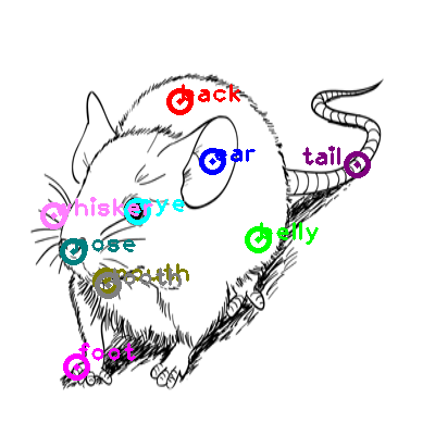 mouse_0001.png