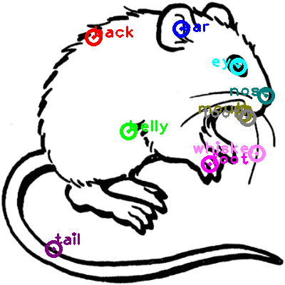 mouse_0014.png