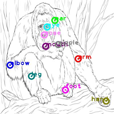 orangutan_0009.png