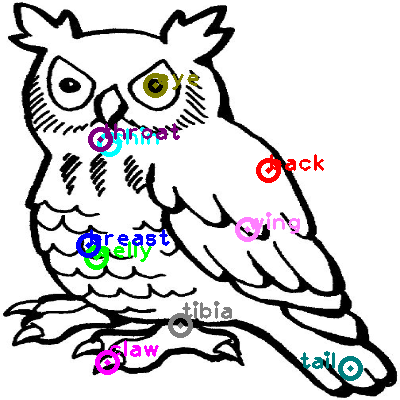 owl_0000.png