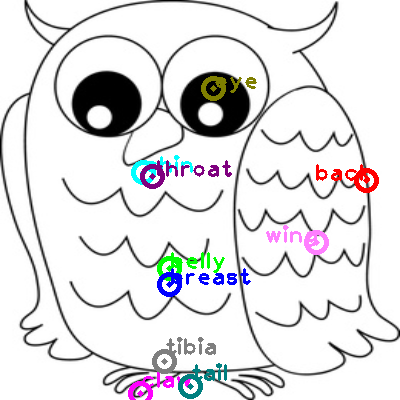 owl_0004.png