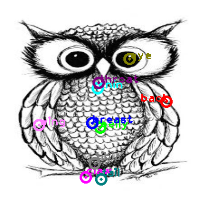 owl_0005.png