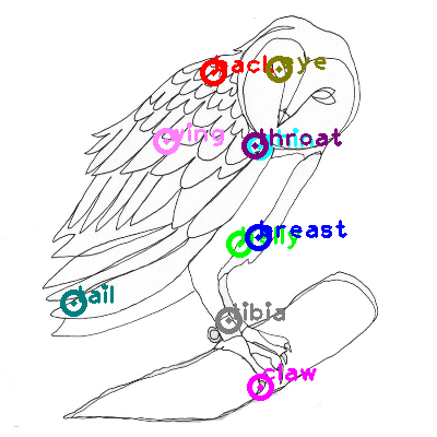 owl_0007.png
