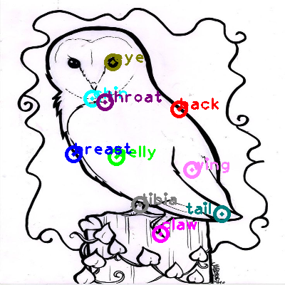 owl_0009.png