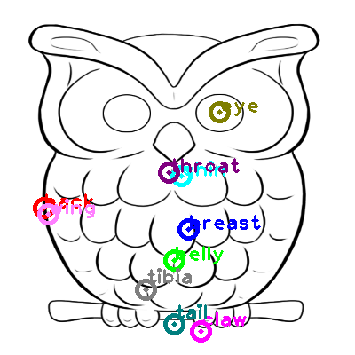 owl_0010.png