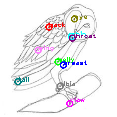 owl_0012.png