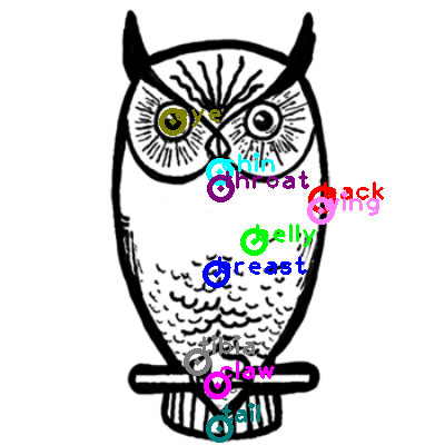 owl_0014.png