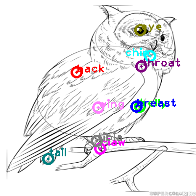 owl_0015.png