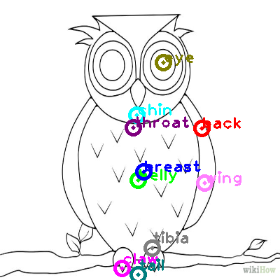 owl_0016.png