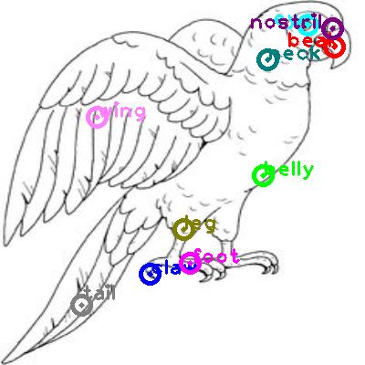 parrot_0001.png