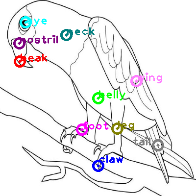 parrot_0002.png