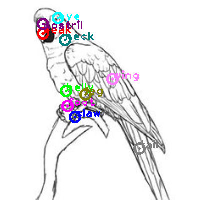 parrot_0006.png