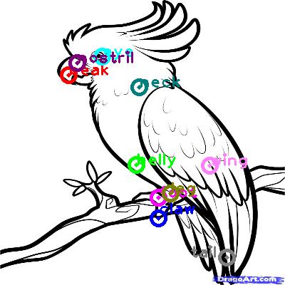 parrot_0008.png