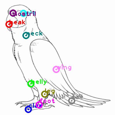 parrot_0009.png