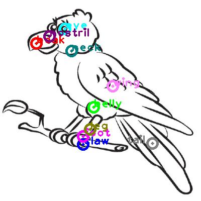 parrot_0013.png