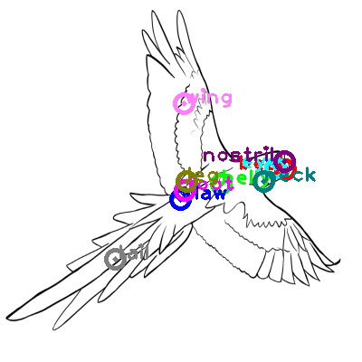 parrot_0016.png