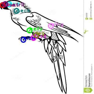 parrot_0023.png