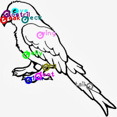 parrot_0026.png