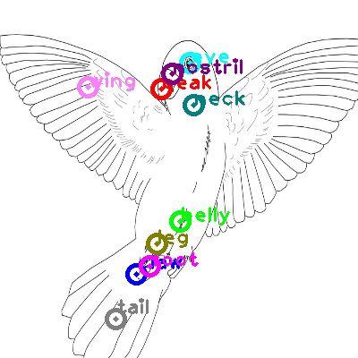 parrot_0027.png