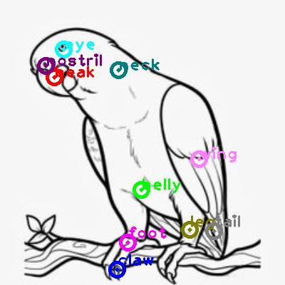 parrot_0030.png