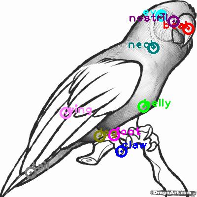 parrot_0036.png