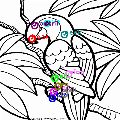 parrot_0041.png