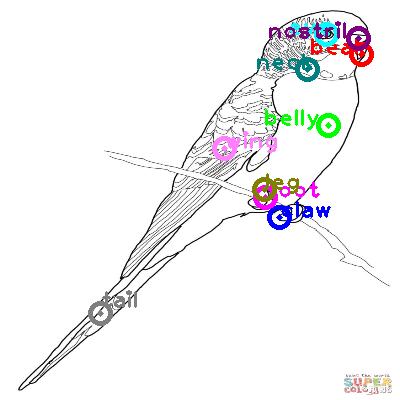 parrot_0043.png