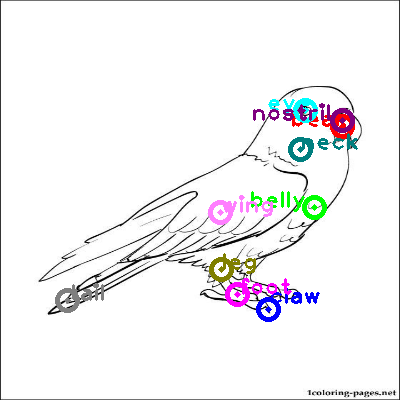 parrot_0044.png