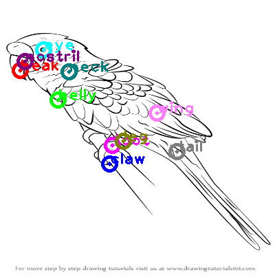 parrot_0046.png