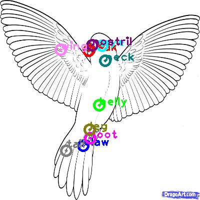 parrot_0049.png