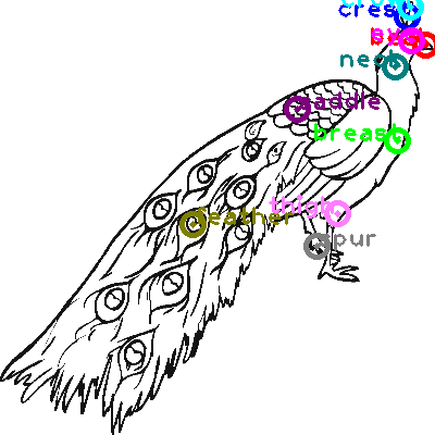 peacock_0001.png