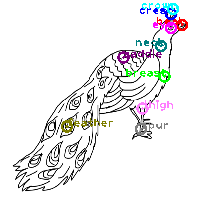 peacock_0003.png