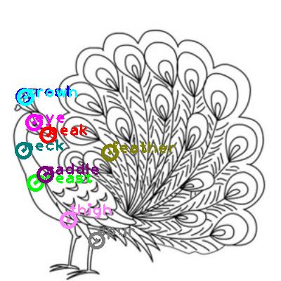 peacock_0015.png